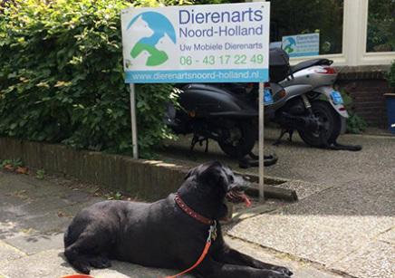 Dierenarts Noord-Holland gevestigd in Alkmaar